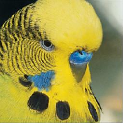 Categoria: Uccelli
